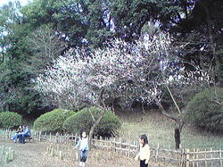 arisugawa2.jpg