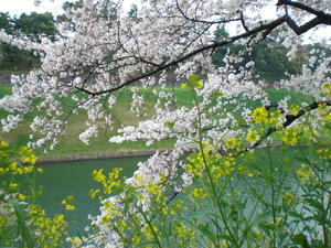 chidorigafuti2012041.JPG
