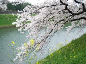 chidorigafuti2012046.JPG