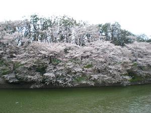 chidorigafuti2012048.JPG