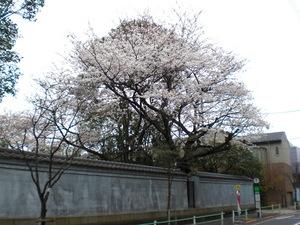 kamedukakouen2010.1.JPG