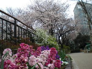kamedukakouen2010.2.JPG