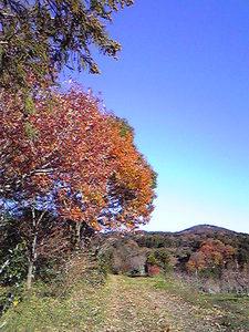 yasato201112042.jpg